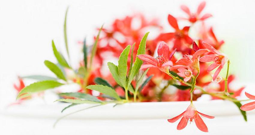 Flores-decoracion-alquiler