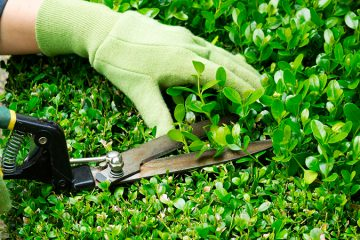 Manteniment de Jardins