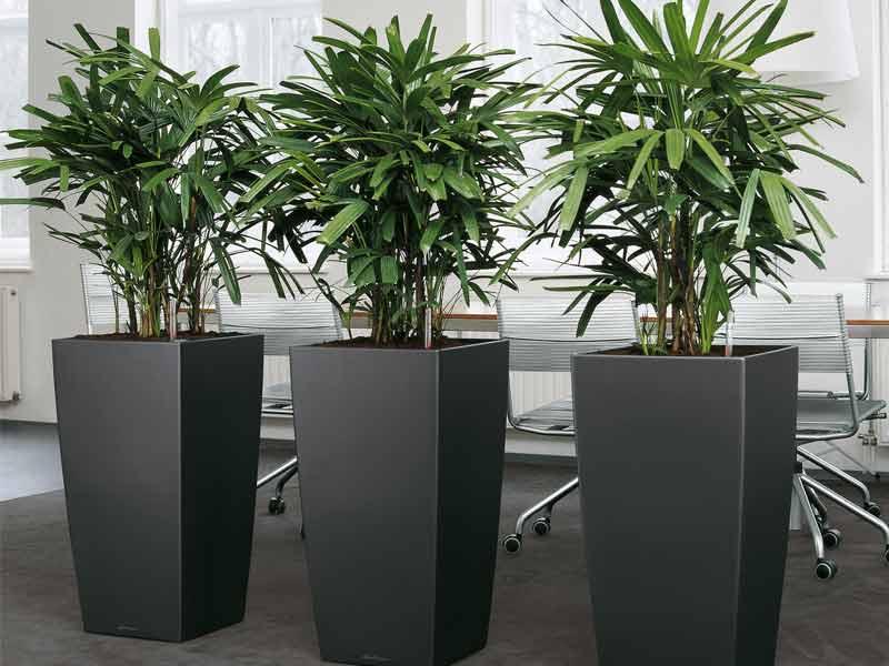 renting plantas