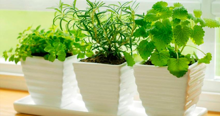 lloguer-de-plantes