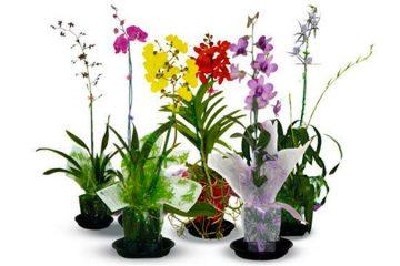 Venta de Plantes